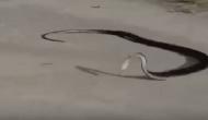 Permalink to Mengejutkan, Seekor Ular Bunuh Diri setelah Memangsa Hewan Ini